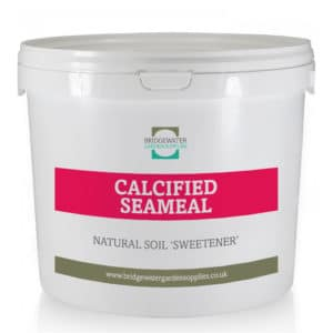 Calcified Seameal-0